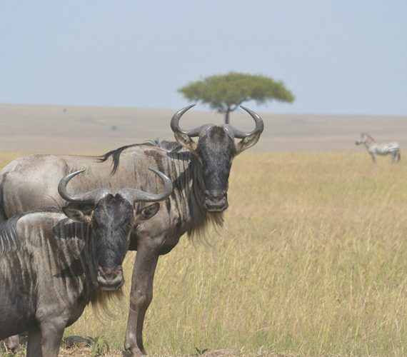 The Maasai Mara, an experience of a lifetime